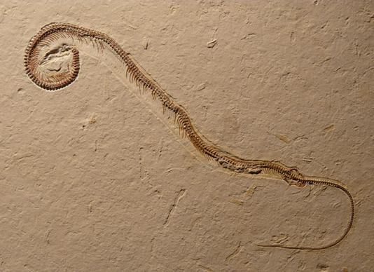 一个长有四条腿的蛇的化石的发现提示