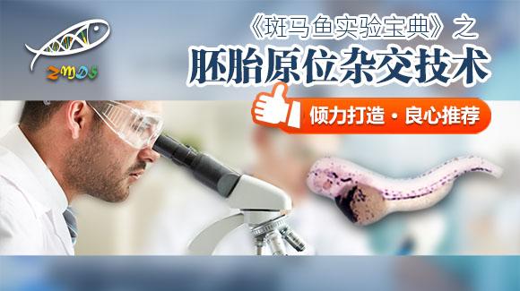 黄志斌:斑马鱼胚胎原位杂交技术